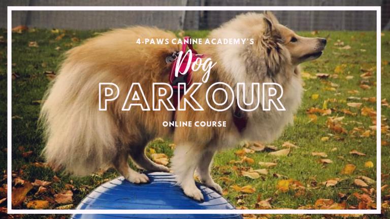 Online dog parkour course