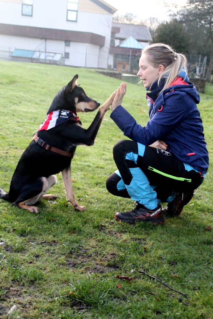 dog showing off high five trick in dog training