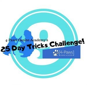 9th day of dog tricks challenge