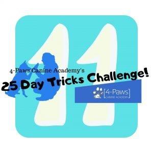 11th day of dog tricks challenge
