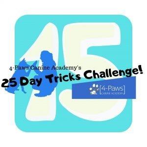 15th day of dog tricks challenge