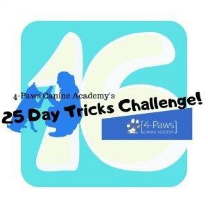 sixteenth day of dog tricks challenge