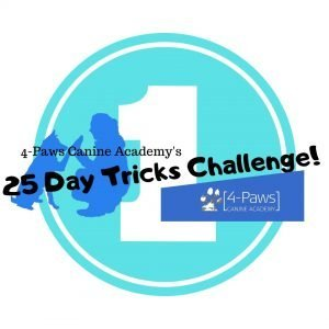first dog tricks challenge