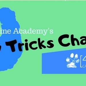 25 day online dog trick training