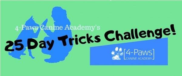 25 day online dog trick training