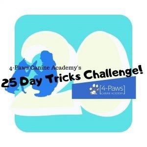 20th day of tricks dog challenge