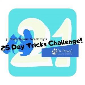 21st dog tricks day challenge