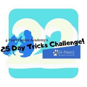 22nd tricks dog challenge