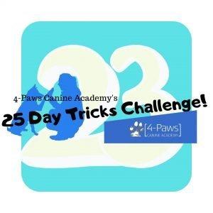23rd dog tricks challenge