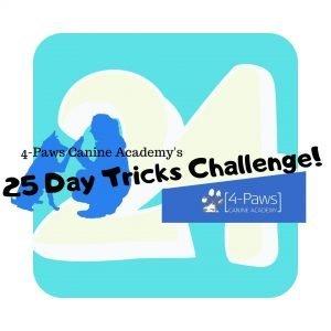 24th dog tricks challenge