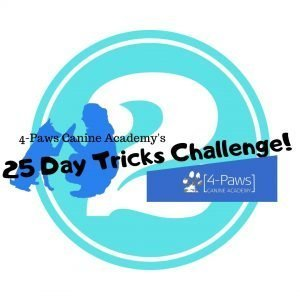 second dog tricks challenge