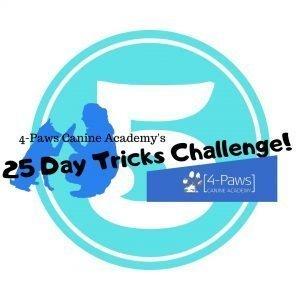 fifth dog tricks challenge