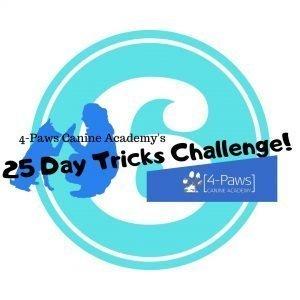 sixth dog tricks challenge