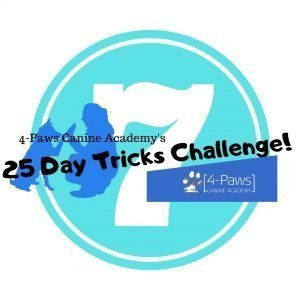 7th dog trick challenge