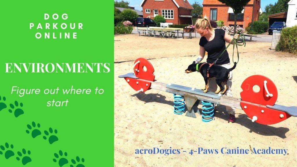 dog parkour environments. dog balances on teeter totter