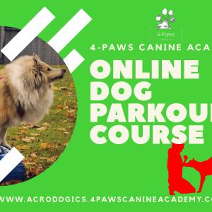 online dog parkour gift